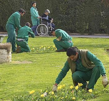 Trabajadores de jardinería