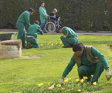 """Proyecto de jardinería de """"Círculos"""""""