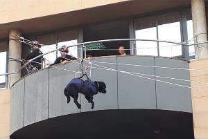 Evacuación de un perro-guía en el simulacro de la UME