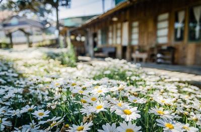 Detalle de flores y una casa en un entorno rural
