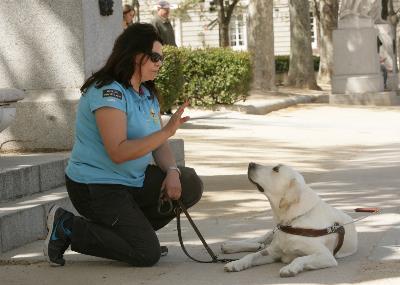 Imagen durante el adiestramiento de un perro guía