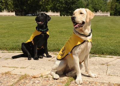 Dos perros guía