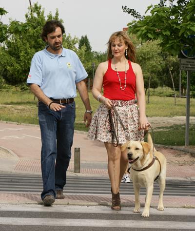 Aprendizaje con perro-guía